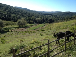 Brancaia in Maremma Winery - Grosseto (GR, Italy)