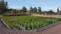 Intensified Wetland for wastewater treatment of an office center in Brazil