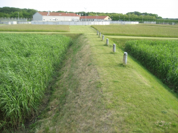 Sorø Sludge Treatment Reed Bed System